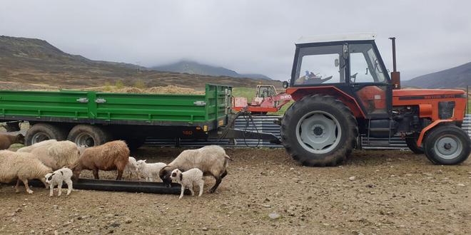 zetor ovce